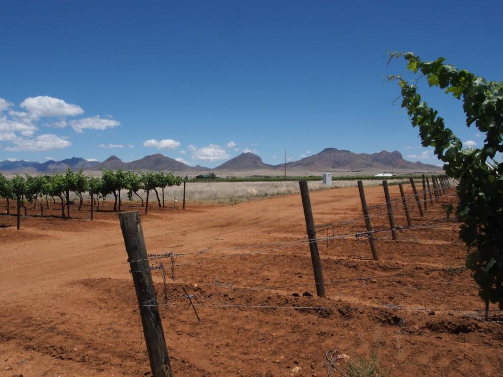 Stayin' Alive – Part 1: The 21st Century Climate Challenge | Stuart Pigott's Planet Wine