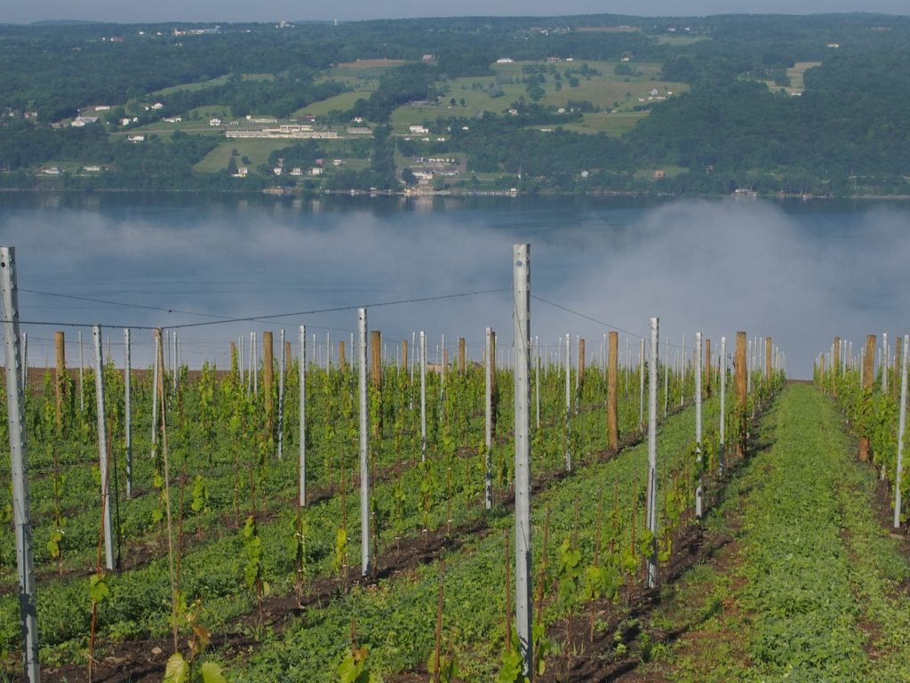 Fog over Seneca Lake